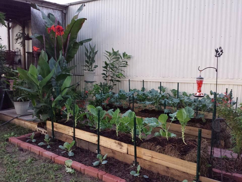 Hay Bale and Flower Garden Straw bale gardening, Garden