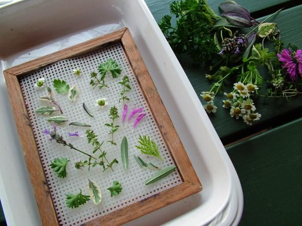 To make a collage, place leaves, flowers, stems or seed heads face-down on the screening of your sheet mold.