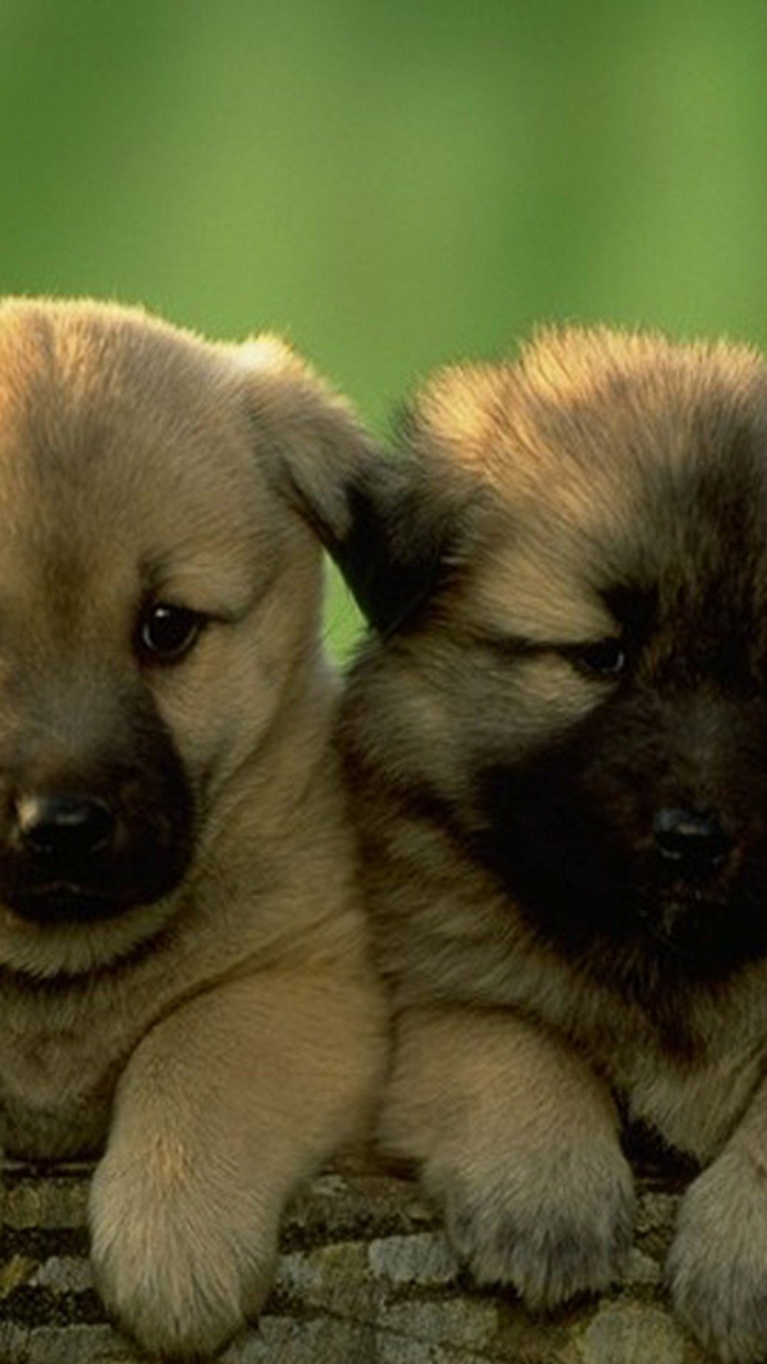 Cute Puppies Pictures Hd Wallpapers For Android Best Android Wallpapers Cute Puppy Pictures Puppy Pictures Cute Puppies