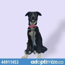 Available pets at Palm Valley Animal Society: Trenton Center in Edinburg, Texas