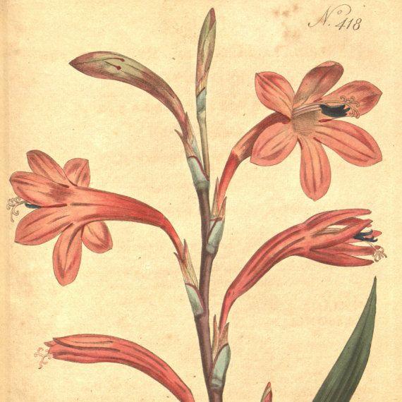 Vintage print, Nature, Botanical art, Flower print, Wall decor ...