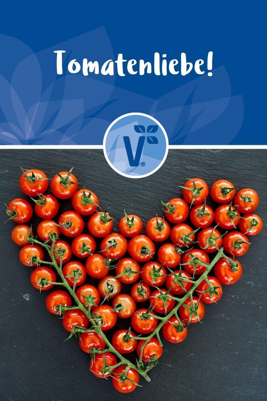 Tomaten Ernten Pflanzen Und Pflegen Tomatenpflanzen Hier Findest Du Alles Uber Tomaten Pflanzen Im Garten Tomatenpflanzen Tomaten E Tomato Plants Harvest