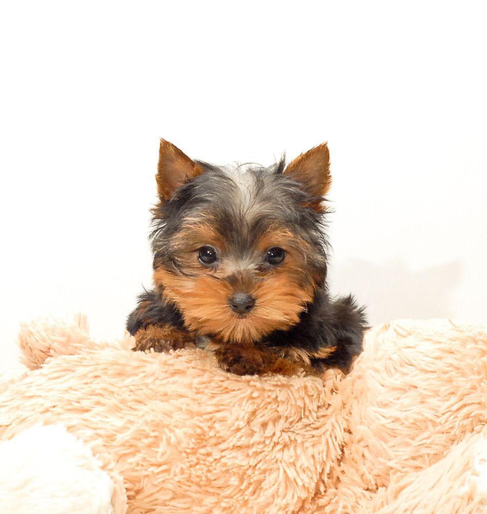 Pin On Sweet Puppies