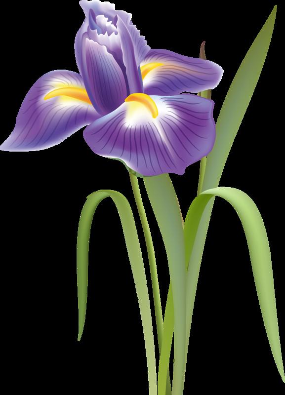 Iris Flower Clip Art Flower Drawing Flower Art Flower Clipart