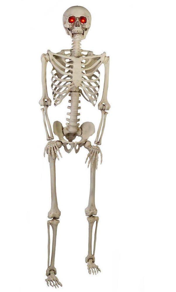 Realistic posable 5ft skeleton led red eyes life size halloween home - life size halloween decorations