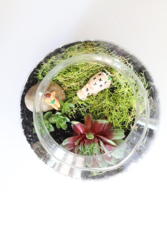 Terrariums are a great way to decorate any indoor or outdoor space—and they're super low maintenance.