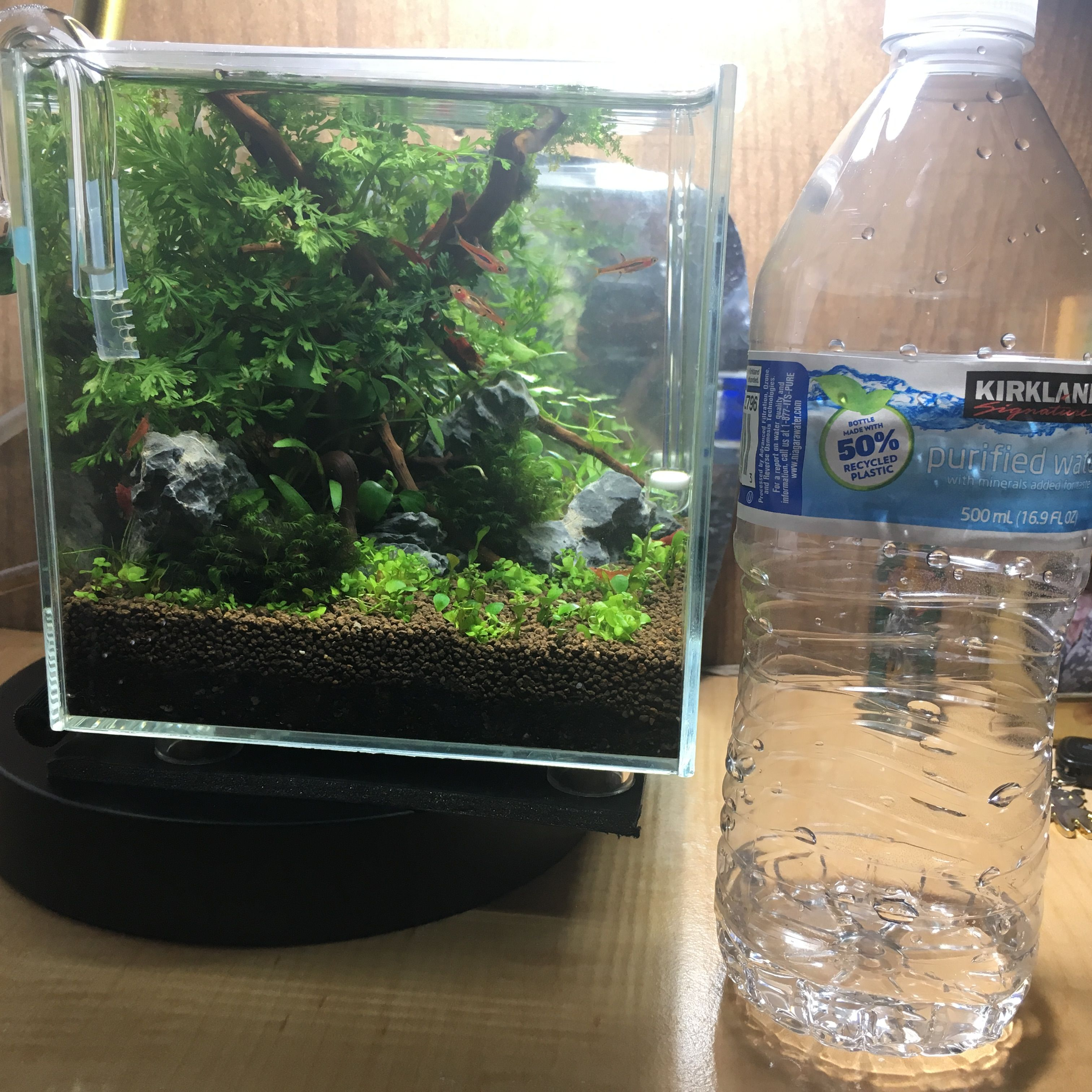 Size Comparison With Water Bottle Made A Top Fin Calm 5 Gal For A Betta Into A High Tech Tank For Cherry Shrimp And A Few Chili Ras Aquascape Nano Tank Betta