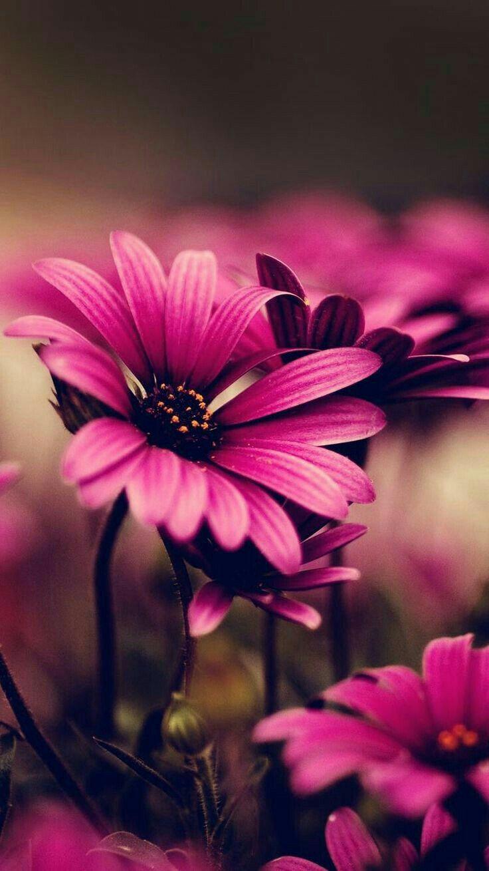 Pin By Saba Afrin On Naqsh E Diwar Beautiful Flowers Wallpapers Love Flowers Beautiful Flowers Pictures