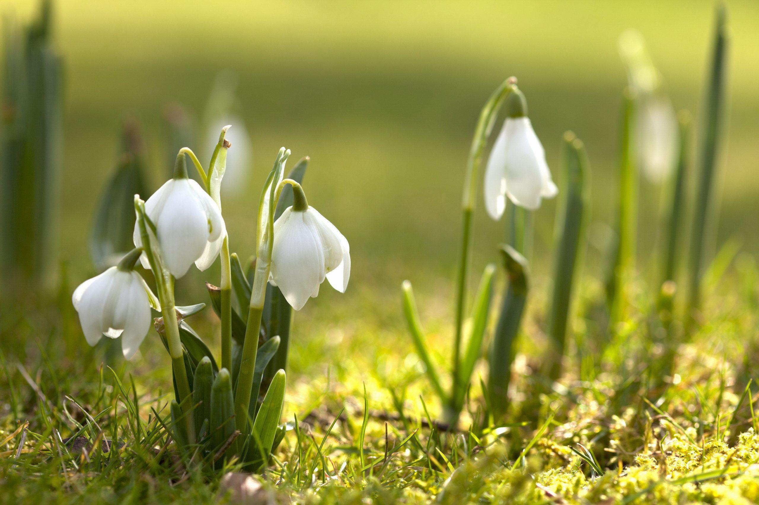 Spring (primavara) C79933d090c37463e73fd200135dee4c