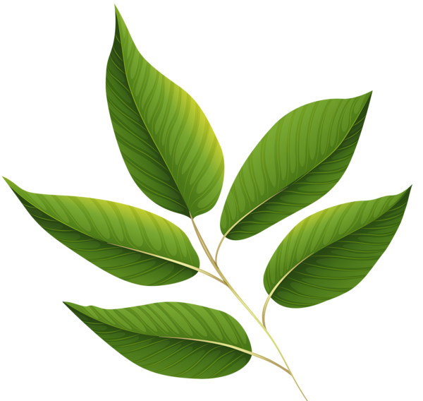 Green Leaves Png Clipart Image Leaves Green Leaves Leaf Clipart