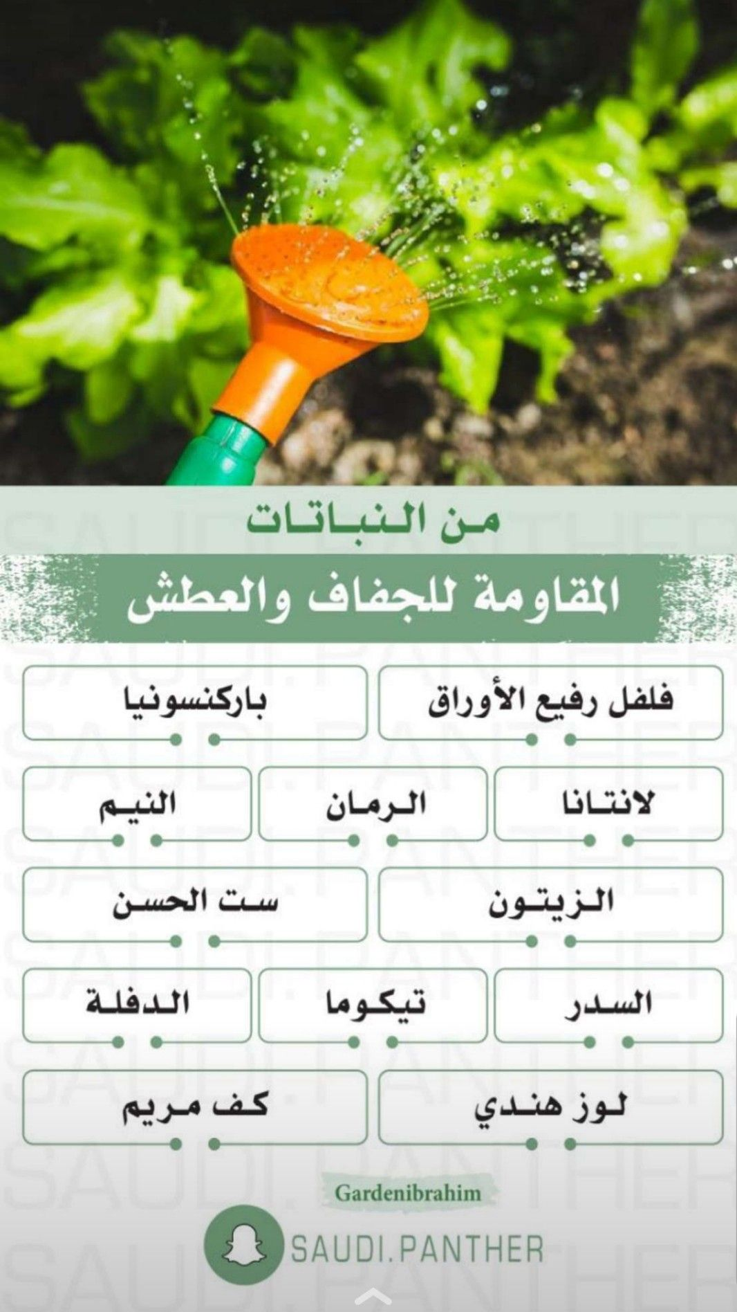 Pin By Hnoreen On Home Managment إدارة المنزل Garden Care Plants House Plants
