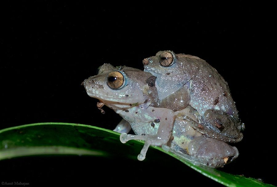 froggy style by amit mahajan photo 163022157 500px frogs and