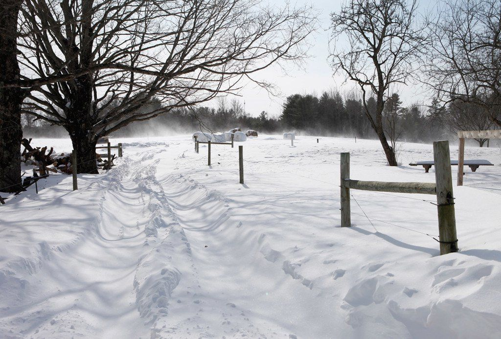 Life on the farms with all this wind and snow. Photo of wind as it blows snow across the pasture at Winter Hill Farm.