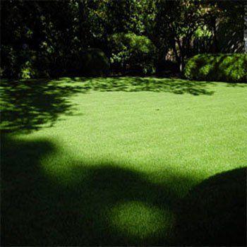 Poa Supina Grass Seed Supranova Poa Supina Shade Grass Seed Shade Grass Grass Seed For Shade Grass Seed