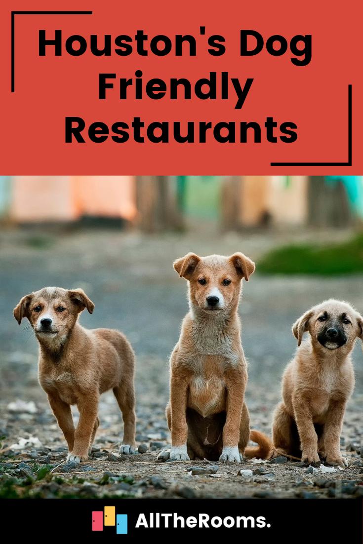 5 Dog Friendly Restaurants In Houston Dog Friends Puppies Cute Dogs