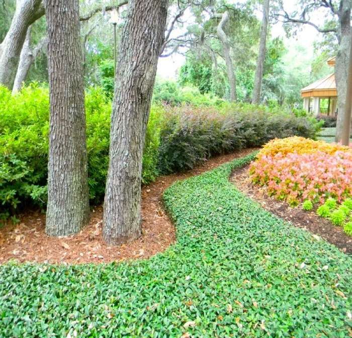 Ivy ground cover full sun google search landscape my for Best low growing groundcover for full sun