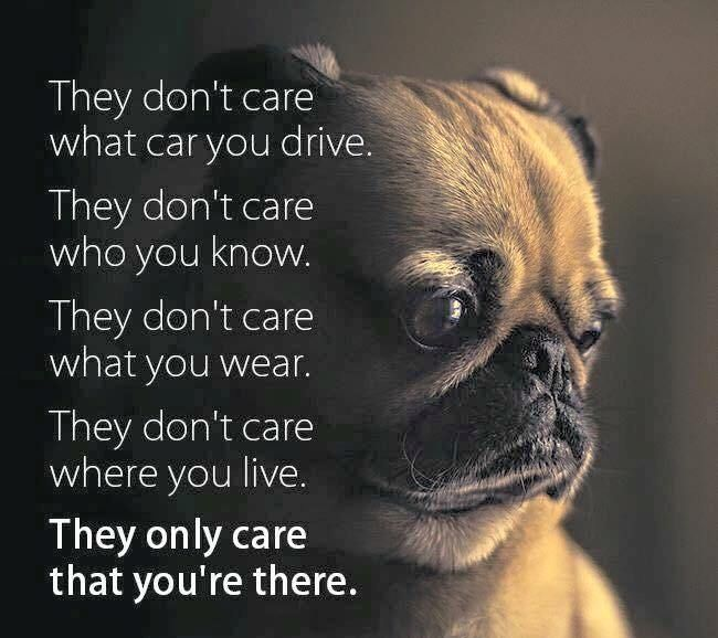 Awww So Sweet Favorite Quotes Pugs Funny Pugs Pug Quotes