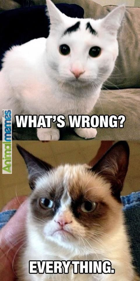 Grumpy cat What's wrong? Everything....