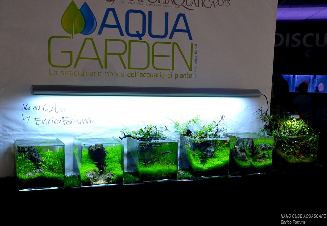 Nano cube aquascape nature aquarium aquascaping by for Aquarium nano cube