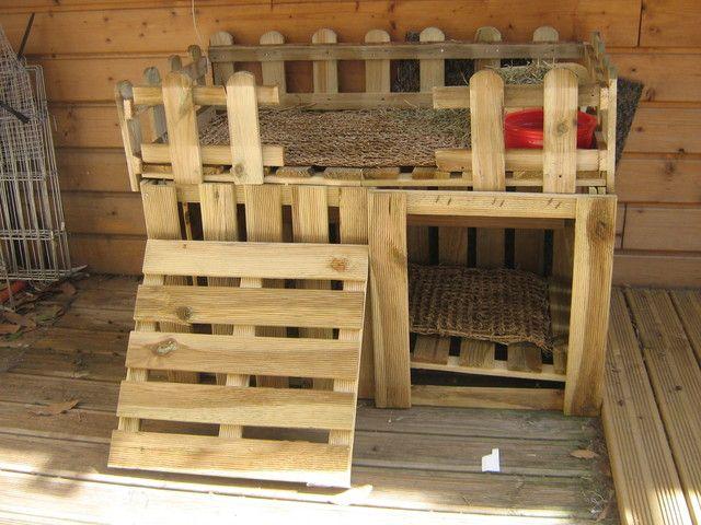 abris animaux cochon d 39 inde guinea pig pinterest refuges cochons et inde. Black Bedroom Furniture Sets. Home Design Ideas