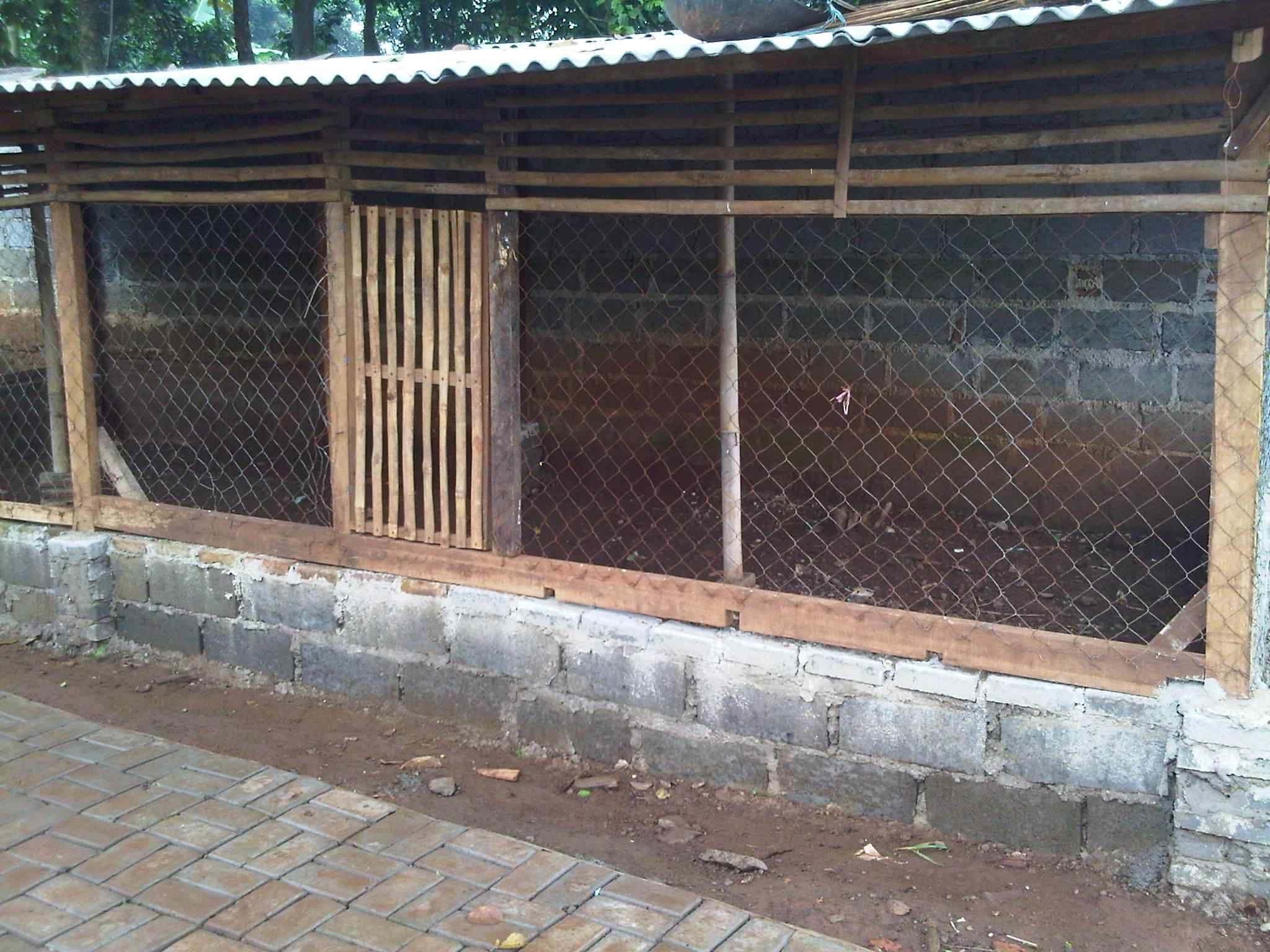 Desain Kandang Umbaran Kandang Ternak Ayam Bangkok - Kandang 1