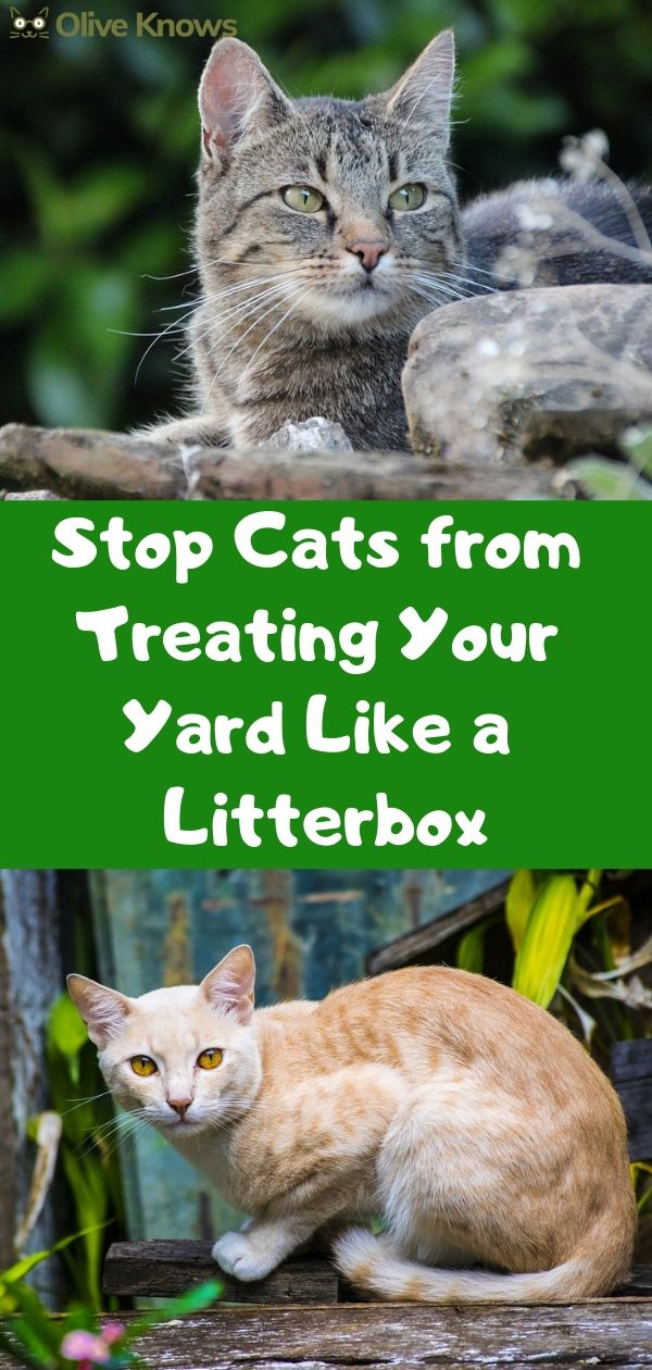 Stop Cats from Treating Your Yard Like a Litterbox | Keep ...
