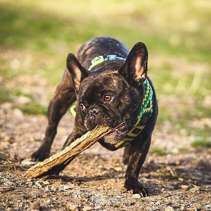 dog イヌ 犬可愛い画像まとめ http://ift.tt/22M9a6d