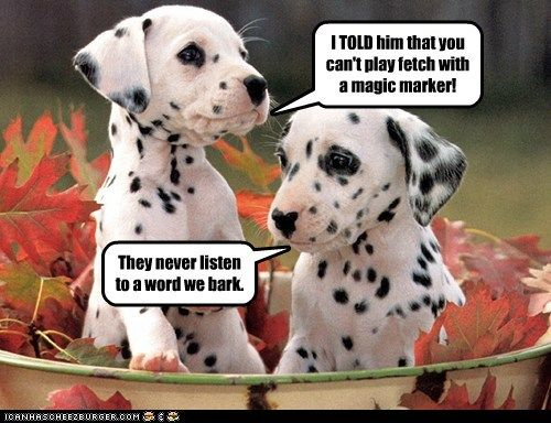 Funny Dalmatian Photos With Captions Has A Hotdog Dalmatian