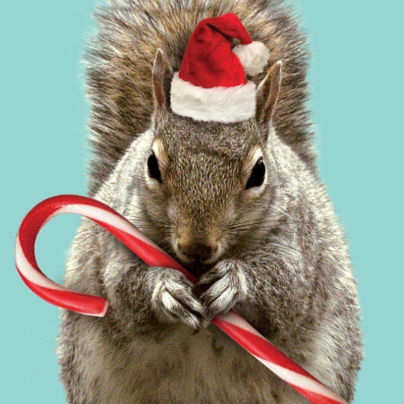 Holiday Christmas SQUIRREL CARD | Cards I love! | Pinterest ...