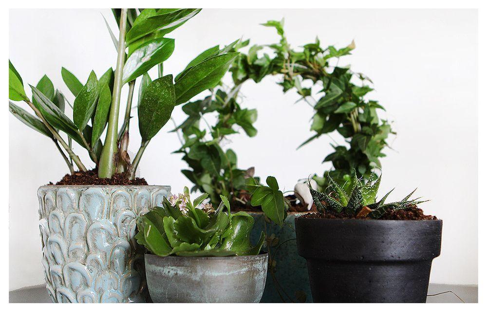 Marie Selenius - Greens, clay and soil