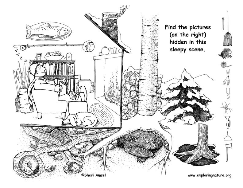 Winter Animals Hibernation Coloring Pages Sketch Page