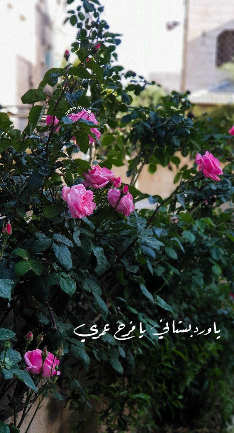 يا ورد بستاني يا فرح يا فرح عمري Iphone Background Wallpaper Iphone Background Flowers