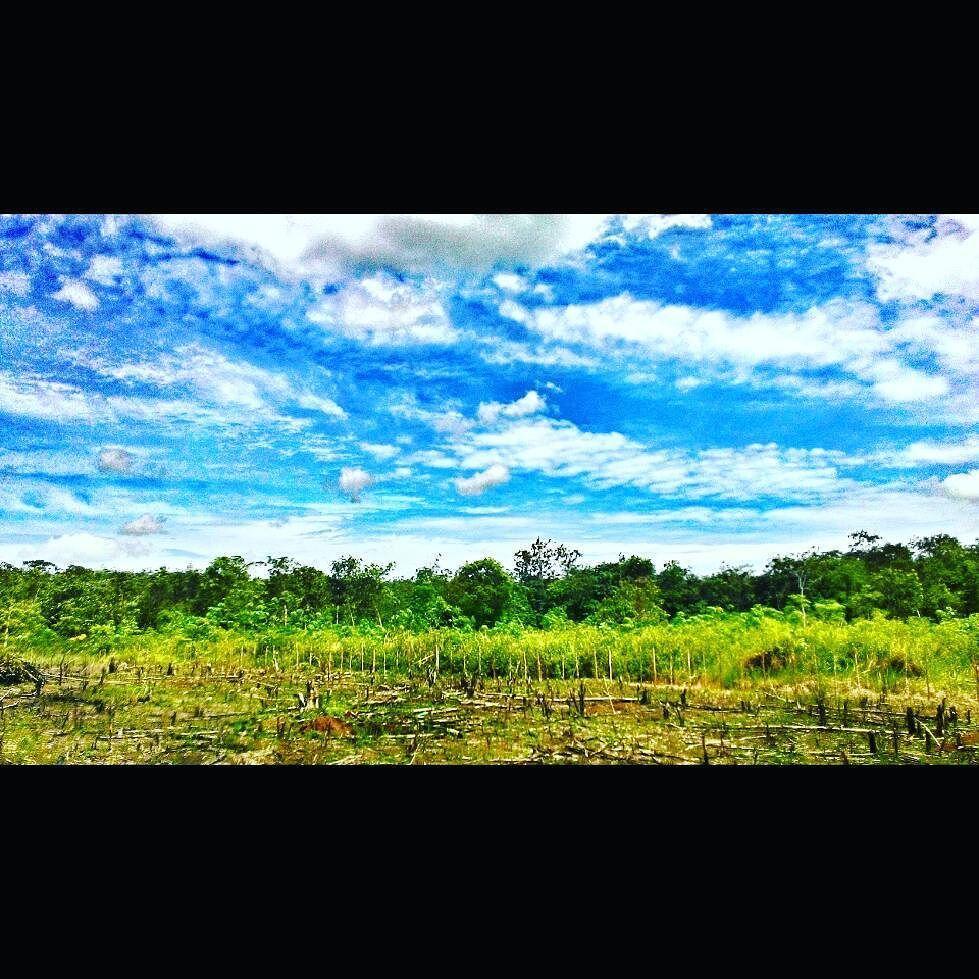 Selamat siang Dunia #langitbiru #likeforlike  #vscocam #latepost #terang by hamdany07