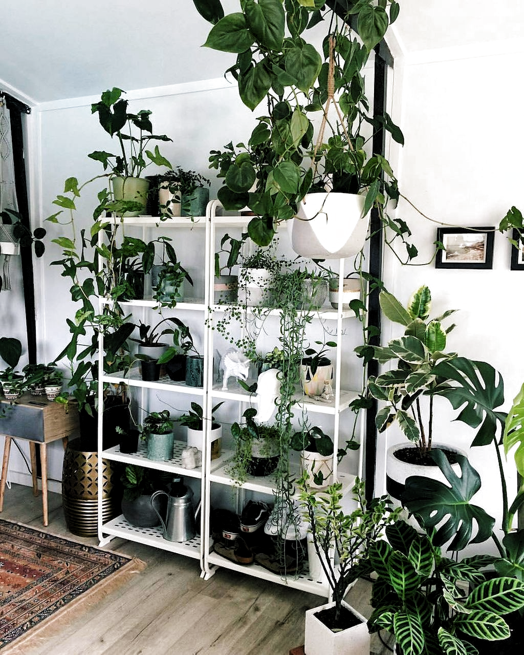 Living Room Plants Shelves - 8+ Greeny Indoor Plants Ideas Will