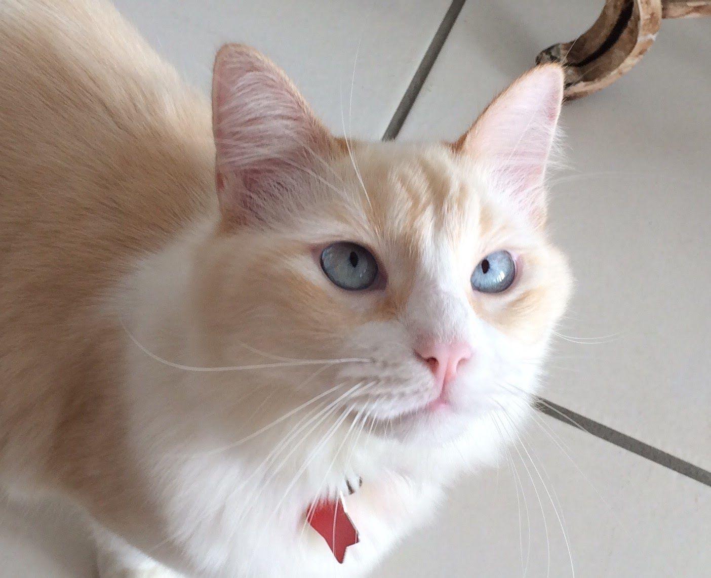 Adopt Mia Sophia On Petfinder Cat Adoption Puppy Adoption Saving Cat