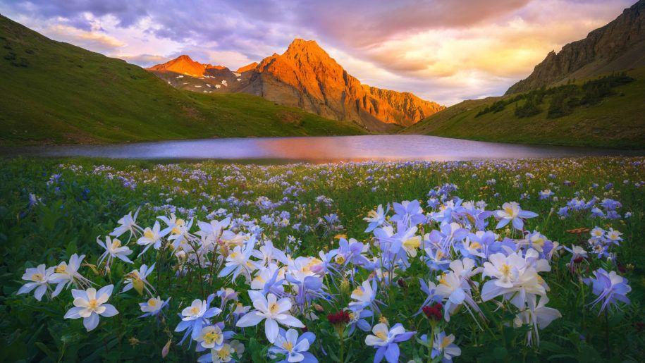 Island Lake Colorado San Juan Mountains Flowers Meadow Sunset Landscape Wallpaper Hd 2560 2160 Landscape Photos Landscape Photography Landscape Wallpaper