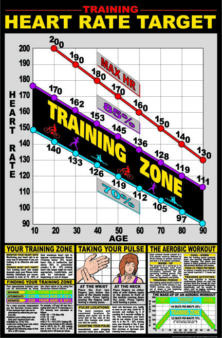 Training Heart Rate Target Poster Charts Body Building Charts Muscle