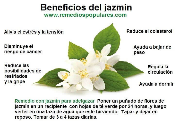 beneficios del te de jazmin para adelgazar