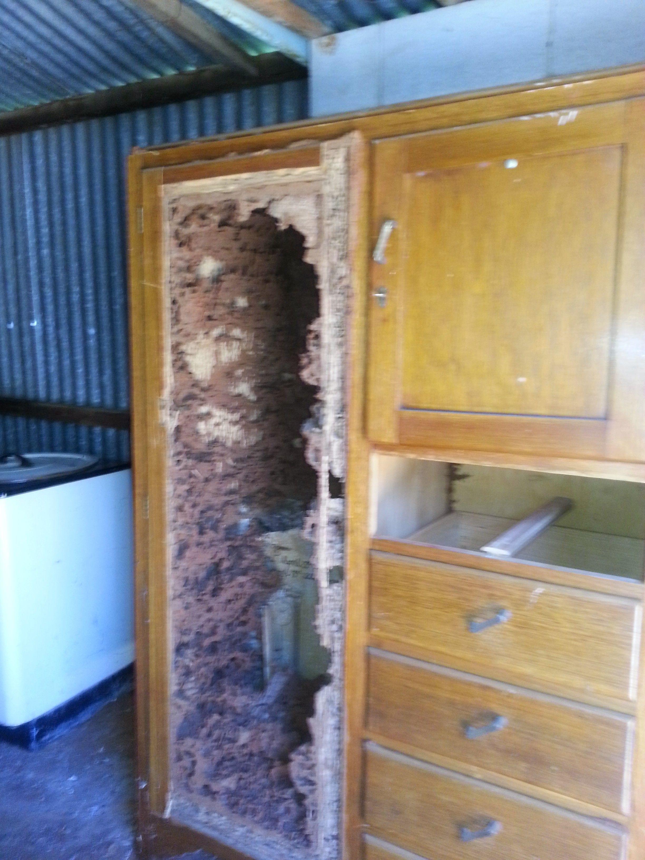 Damage To A Cupboard Mpc Termite Damage Termites Home Decor