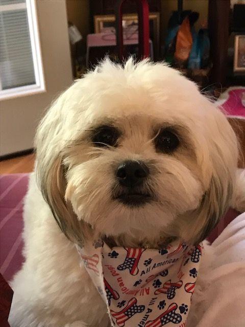 Miss Sami Puppies Bichon Frise Bichon
