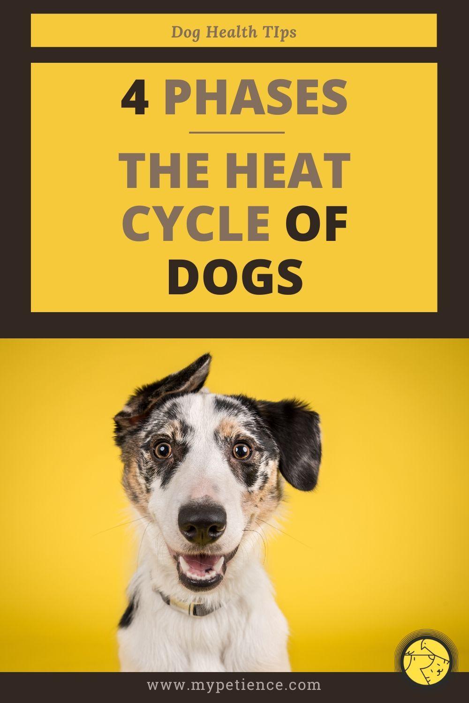 Pin on Dog Health Tips Dog