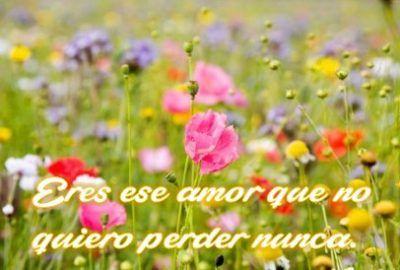 Flores Hermosas Con Frases De Amor Flores Hermosas Meadow