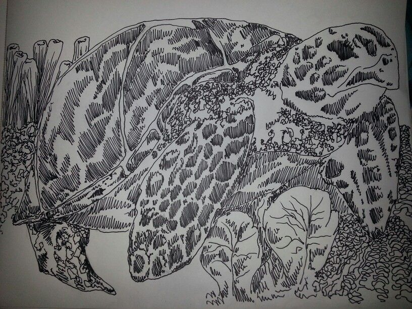 Permanent Sketch Book: My Sea Turtle Sketch. Done With A Sharpie. $50.00 On My