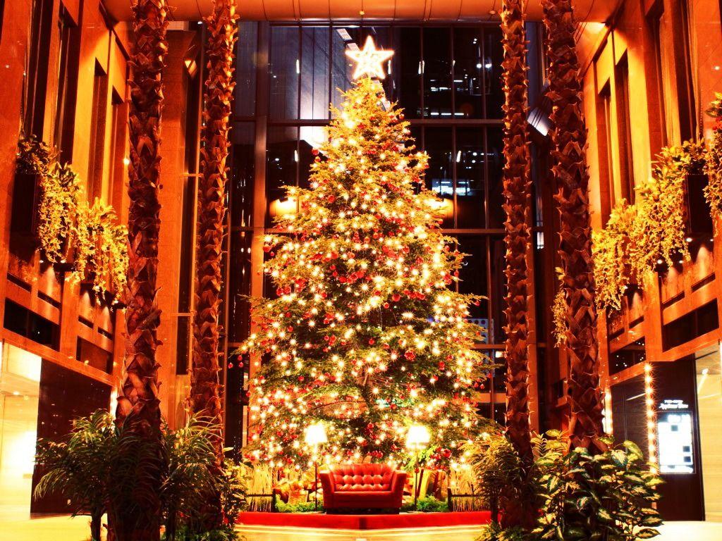 Fuck yeah christmas trees christmas trees pinterest