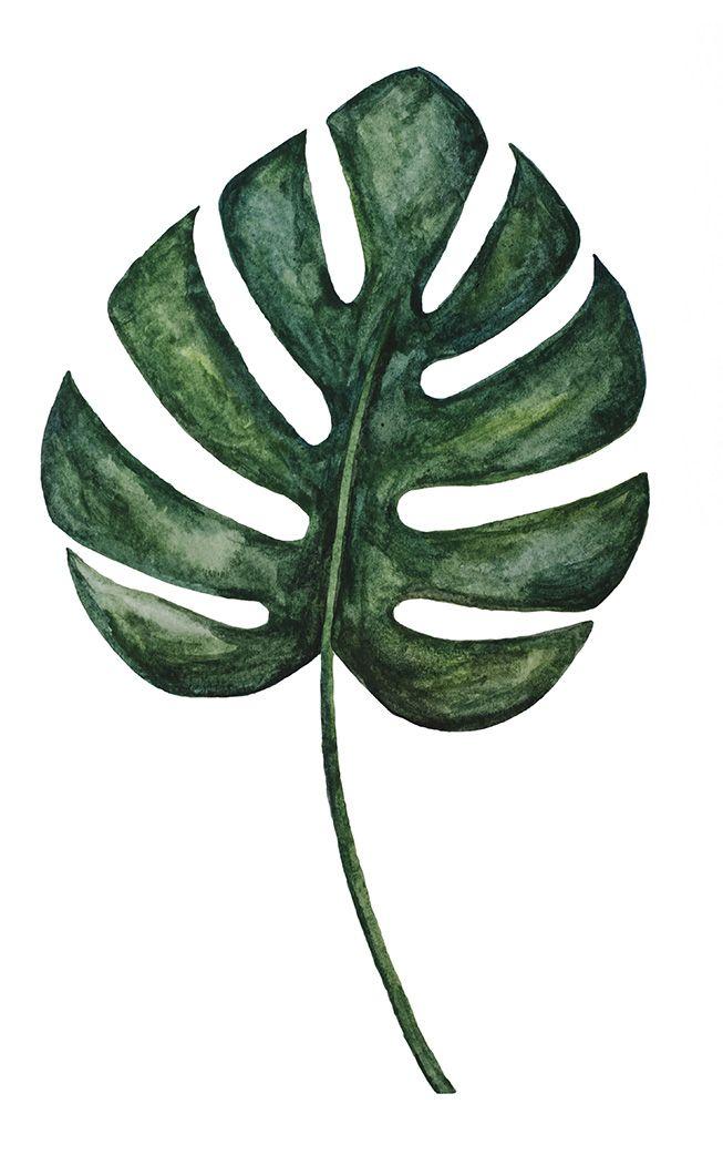 Watercolor Monstera Leaf Imagens Para Quadros Decorativos