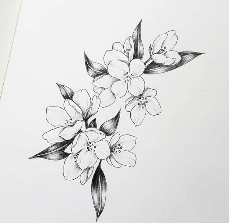 Can Anybody Tell Me What Kind Of Flower Is In This Drawing I Love It Gardening Garden Jasmine Flower Tattoos Flower Tattoo Shoulder Simple Flower Tattoo