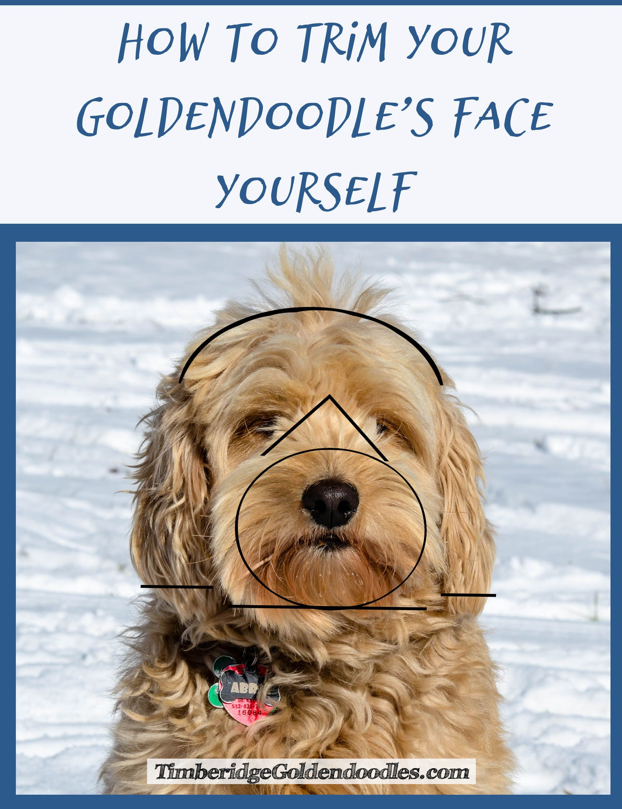 17 best ideas about goldendoodle haircuts how to trim a goldendoodle s face yourself goldendoodle
