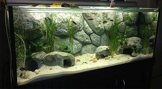 Diy Foam Aquarium Background Aquarium Backgrounds Diy Aquarium