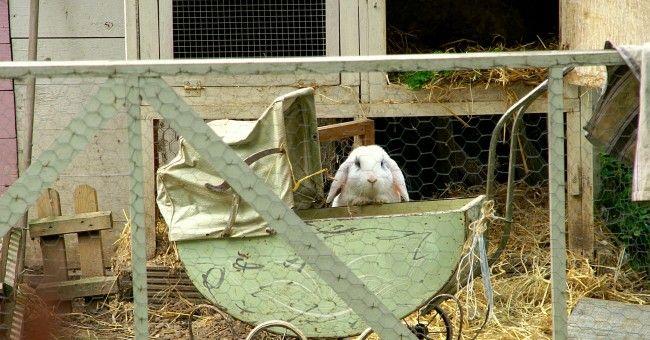 kaninchengehege wohnung google suche zwergkaninchen kaninchen zwergkaninchen und. Black Bedroom Furniture Sets. Home Design Ideas