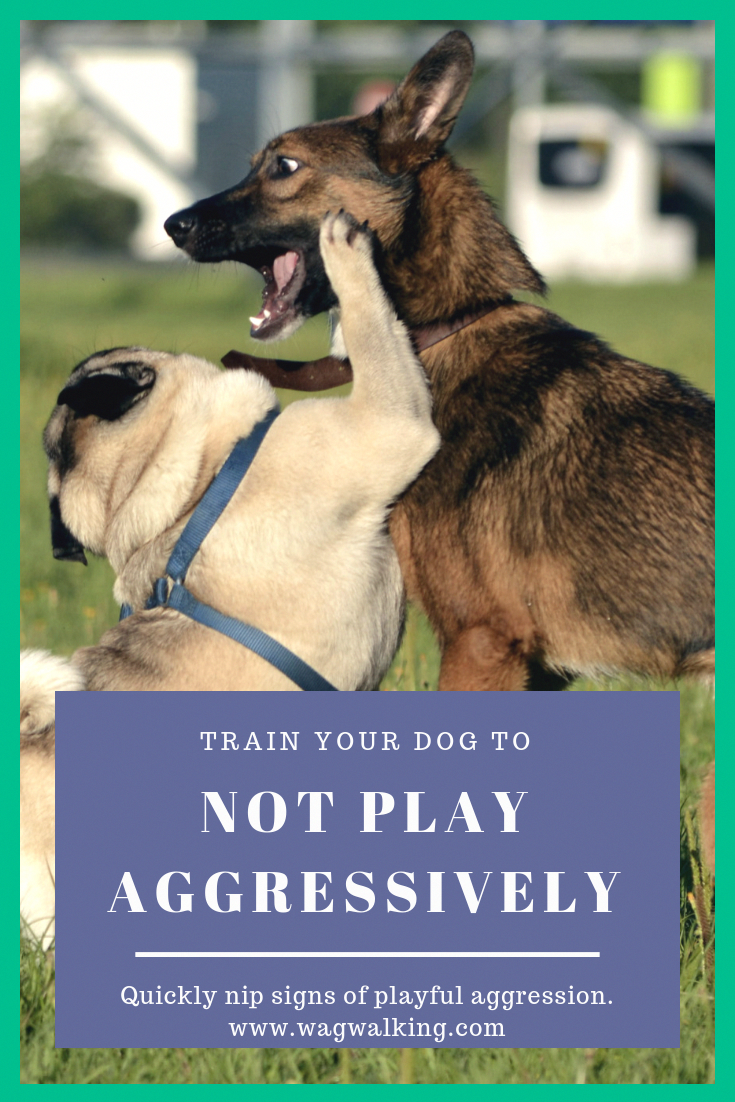 Does Your Dog Play Aggressively Use This Guide To Train Your Dog